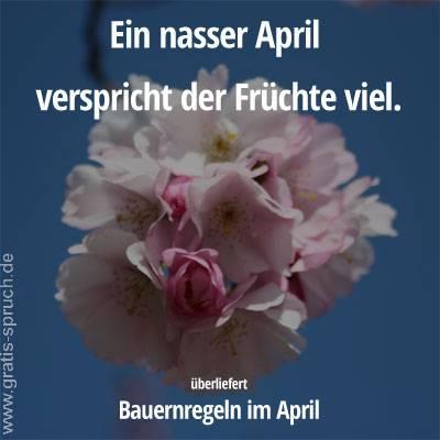 Sprüche Im April Gratis Spruchde